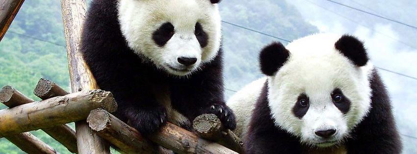 Couverture facebook panda