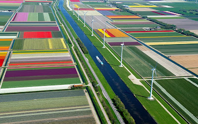 Campos de Tulipas de Spoorbuurt - Holanda