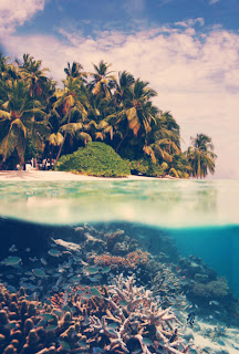 under water view with palm trees at beach