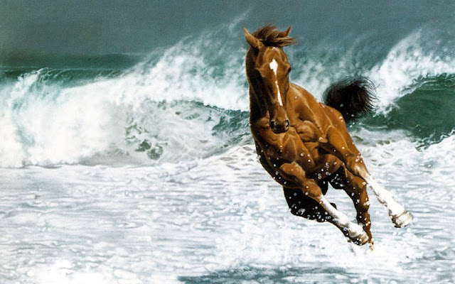 horses+wallpapers+%25286%2529