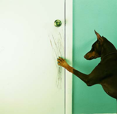 Dog Scratching At Door Choice Image Doors Design Modern