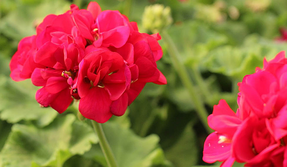 Bloomingwriter: Gardening in Nova Scotia: Blooming where we're ...