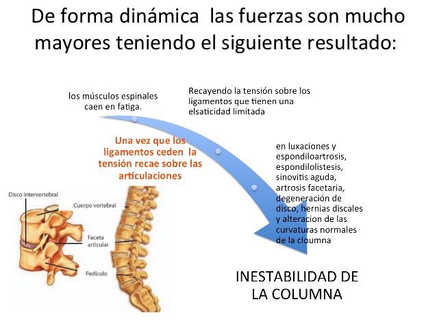 La cantidad de las vértebras en el departamento de pecho de la columna vertebral
