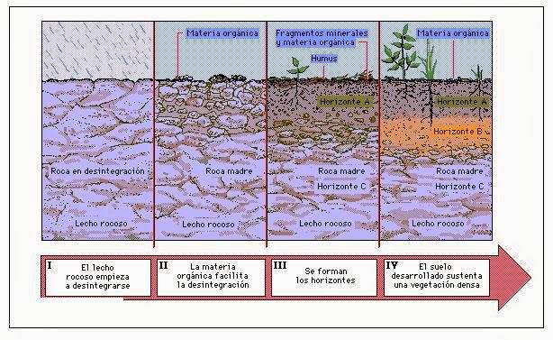 Cuidemos el suelo donde vivimos cuidemos nuestro suelo for Suelos y tipos de suelos