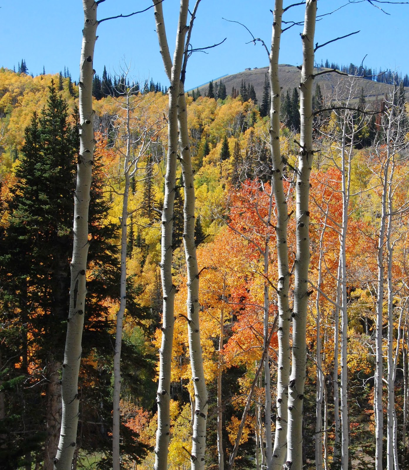 fall colors, park city, utah