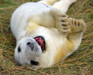 Funny Happy Animals
