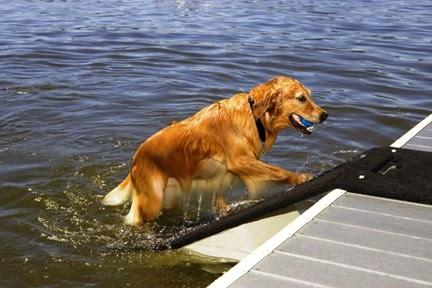rampa para cães na piscina