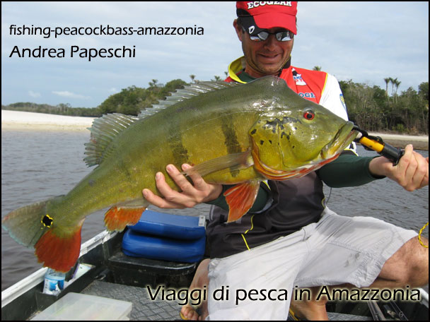 Peacock Bass Italy