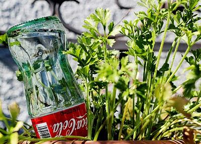 Dispensador de agua para las plantas