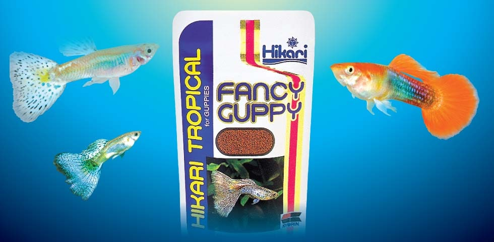 Alimentos hikari para goldfish koi tropicales fancy guppy for Alimento para goldfish