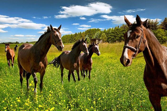 hình nền ngựa đẹp nhất