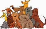 Il CCT, Clud dei Cani in Terapia