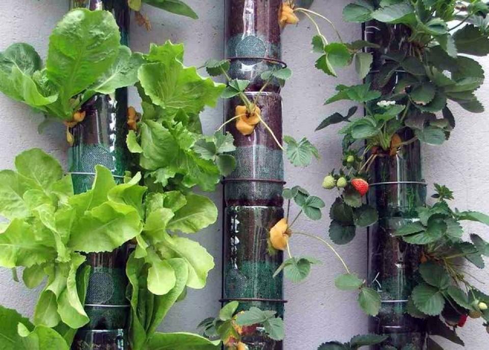 Interesting ideas for decor: вертикальный огород из пластико.