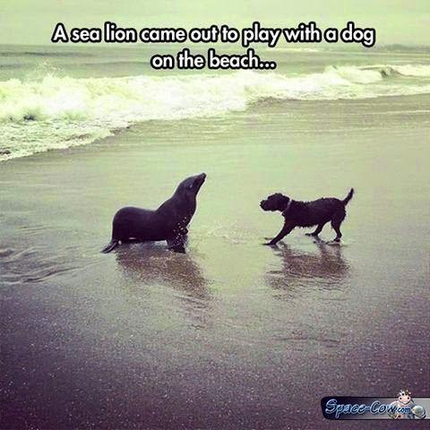 funny cute animals pics