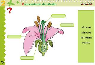 http://www.juntadeandalucia.es/averroes/centros-tic/41009470/helvia/aula/archivos/repositorio/0/74/html/datos/03_cmedio/03_Recursos/actividades/04/act2.htm