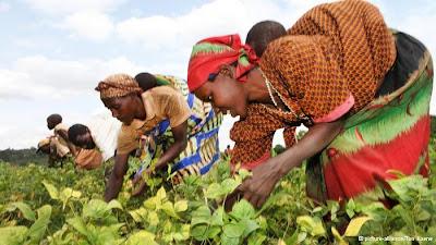 Brasil destina US$ 2,3 milhões para desenvolver agricultura na África