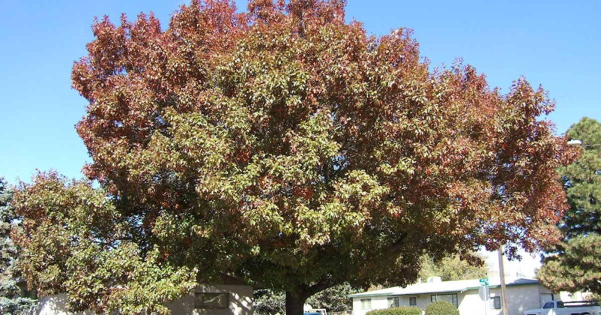 Trees that please nursery shade trees for small spaces for Trees for small spaces