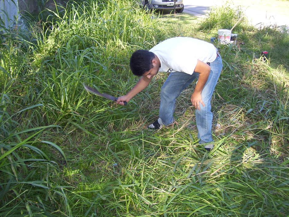 Mil flores cortando el pasto en un terreno bald o de glew - Cortar hierba alta ...