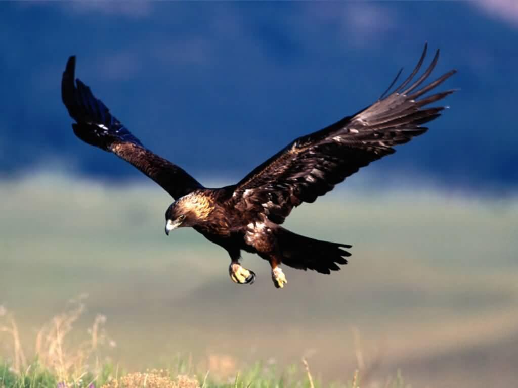 gambar burung elang si hewan berdarah panas