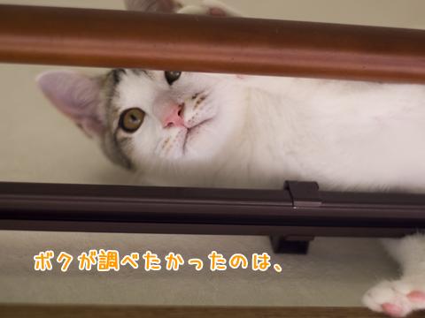 カーテンレールの上の子猫