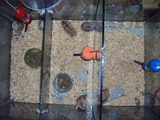 Koleksi Hamster (Dulu)