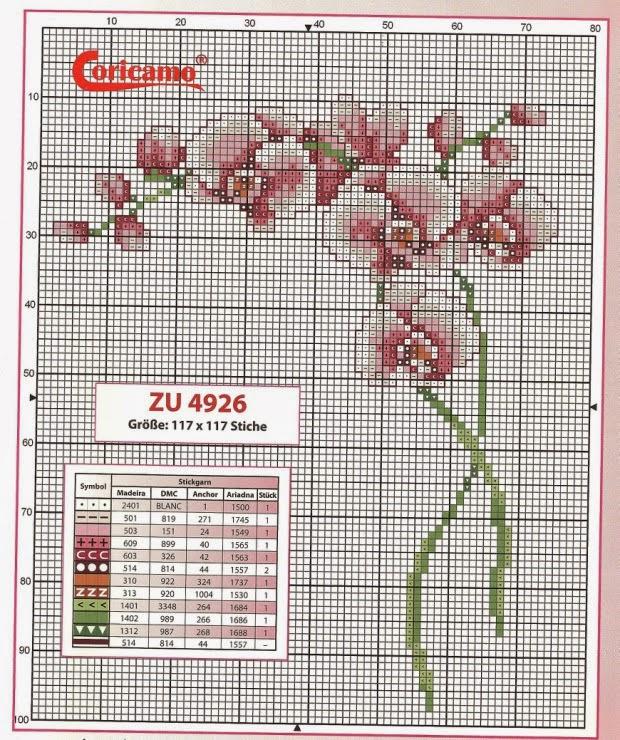 Flores Belas Orquídeas em Ponto Cruz