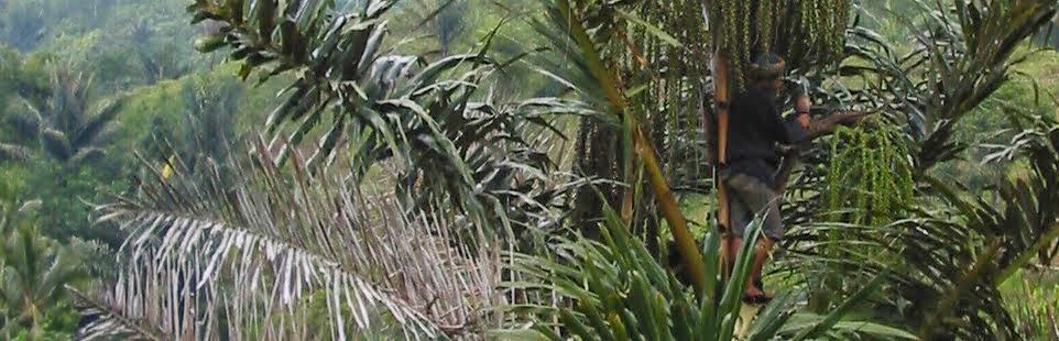 meninggur