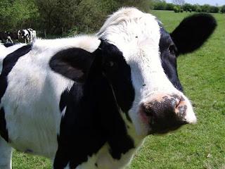 La bufala della bambina affetta da leucemia sbarca su Plus