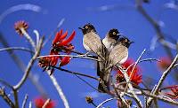 Profesyonel Olarak Çekilmiş HD Kuş Resimleri