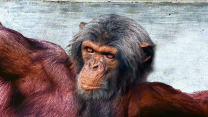http://www.theonion.com/articles/biologists-confirm-god-evolved-from-chimpanzee-dei,35755/