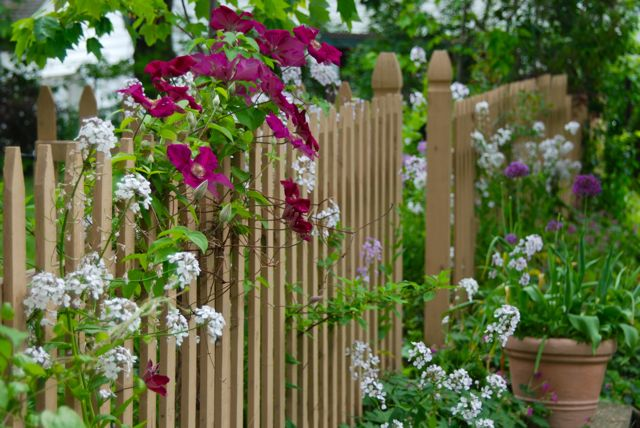 The Fence garden combination for May: Clematis 'Earnest Markham' with tall woodland phlox and Allium 'Purple Sensation' in a pot.