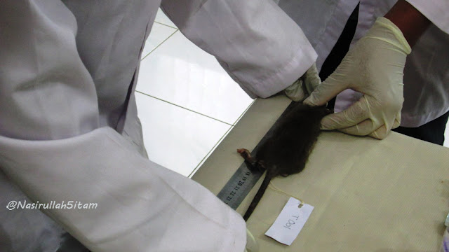 Praktek berlangsung di dalam lab