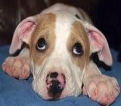 não basta se comover, é preciso participar e agir, tome uma atitude. adote um cachorro abandonado!