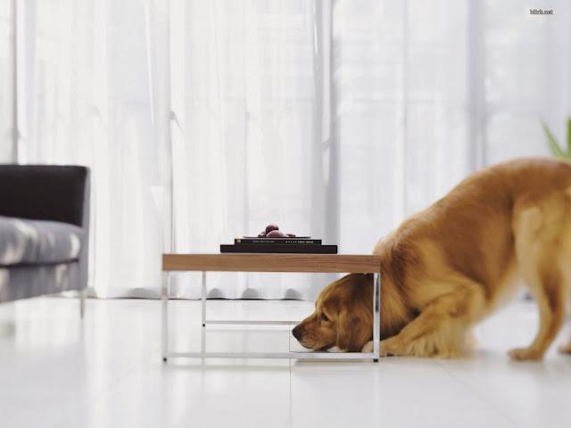 """<img src=""""http://1.bp.blogspot.com/-OsdjB9Et-80/Uq8O64crbHI/AAAAAAAAFoM/lrMqEJBHkFc/s1600/cvrr.jpeg"""" alt=""""dogs animal wallpapers"""" />"""
