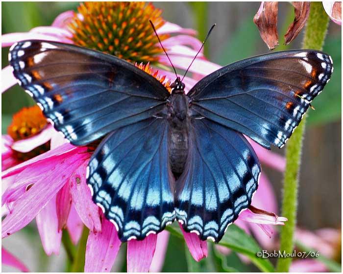 foto kupu kupu indah - gambar binatang
