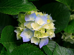 زهور لكل من جاؤا عندي