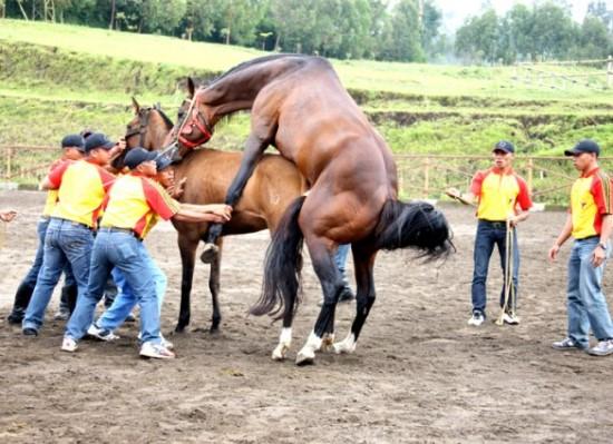 calon pil kuda pkr