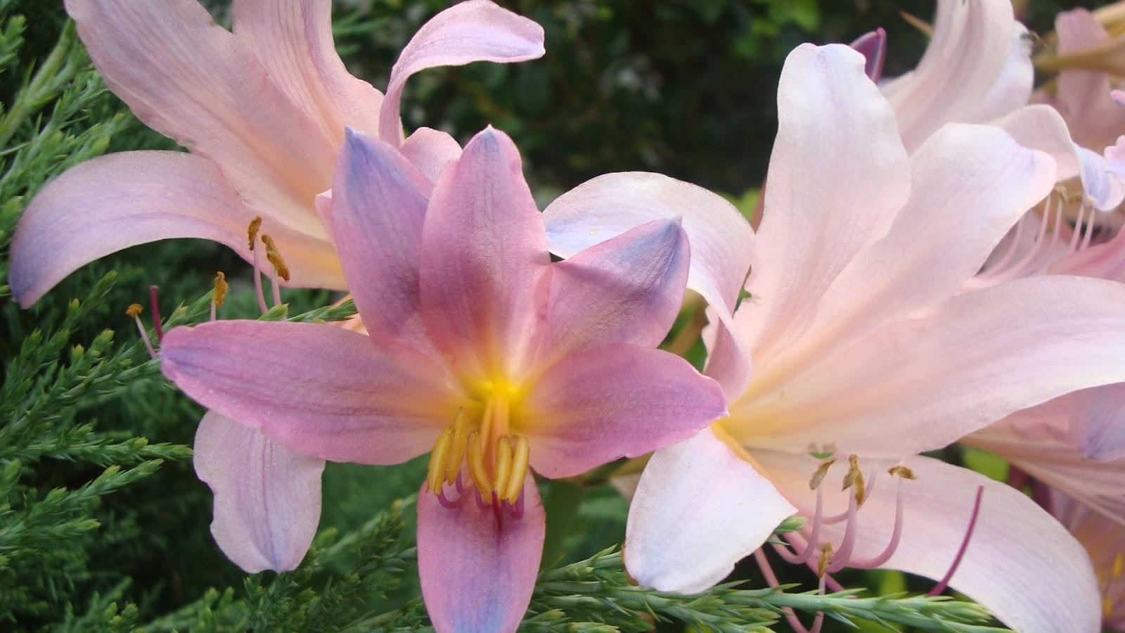 Naked Lady Flower Gardens Hot Girls Wallpaper