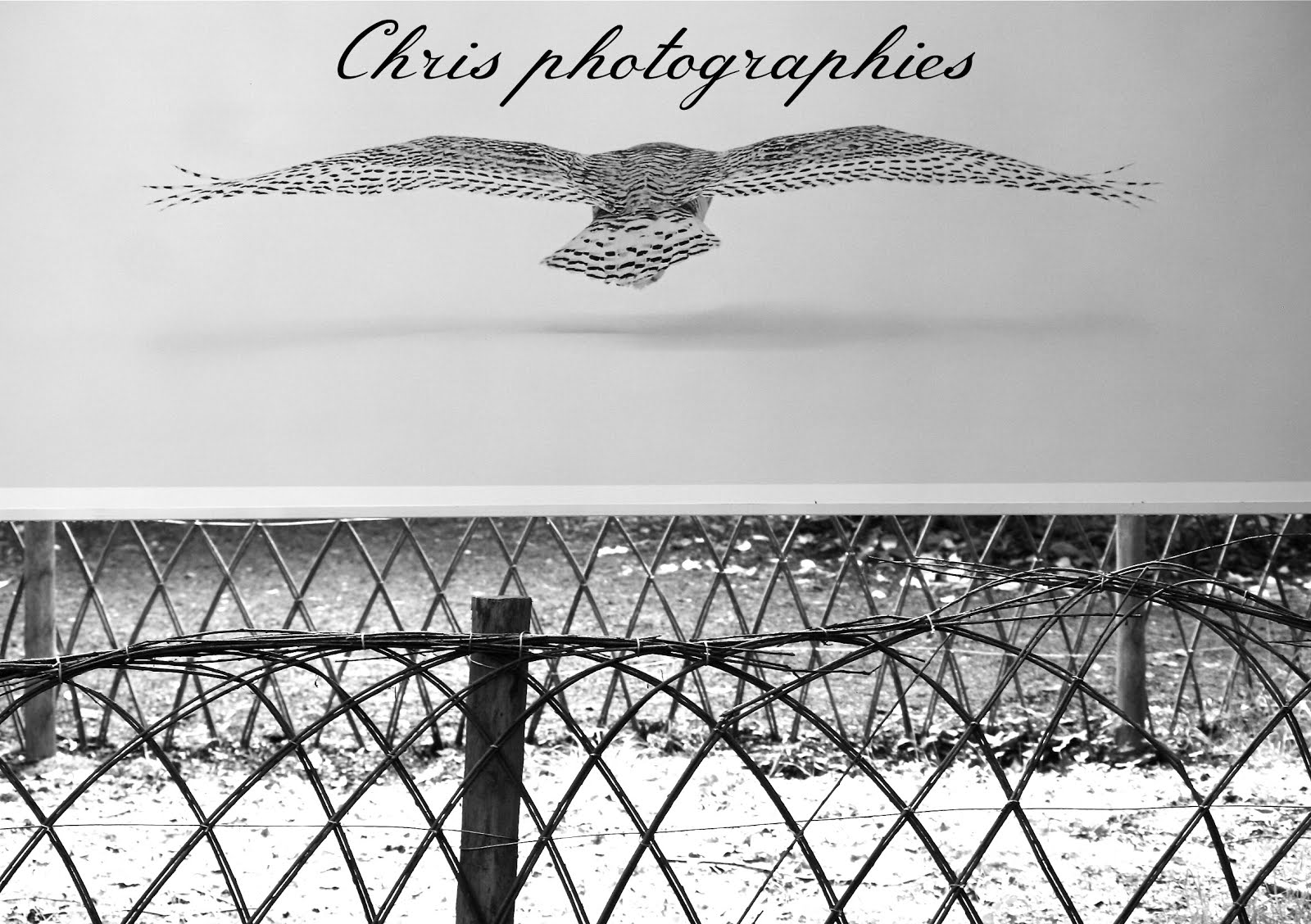 Chris photographies