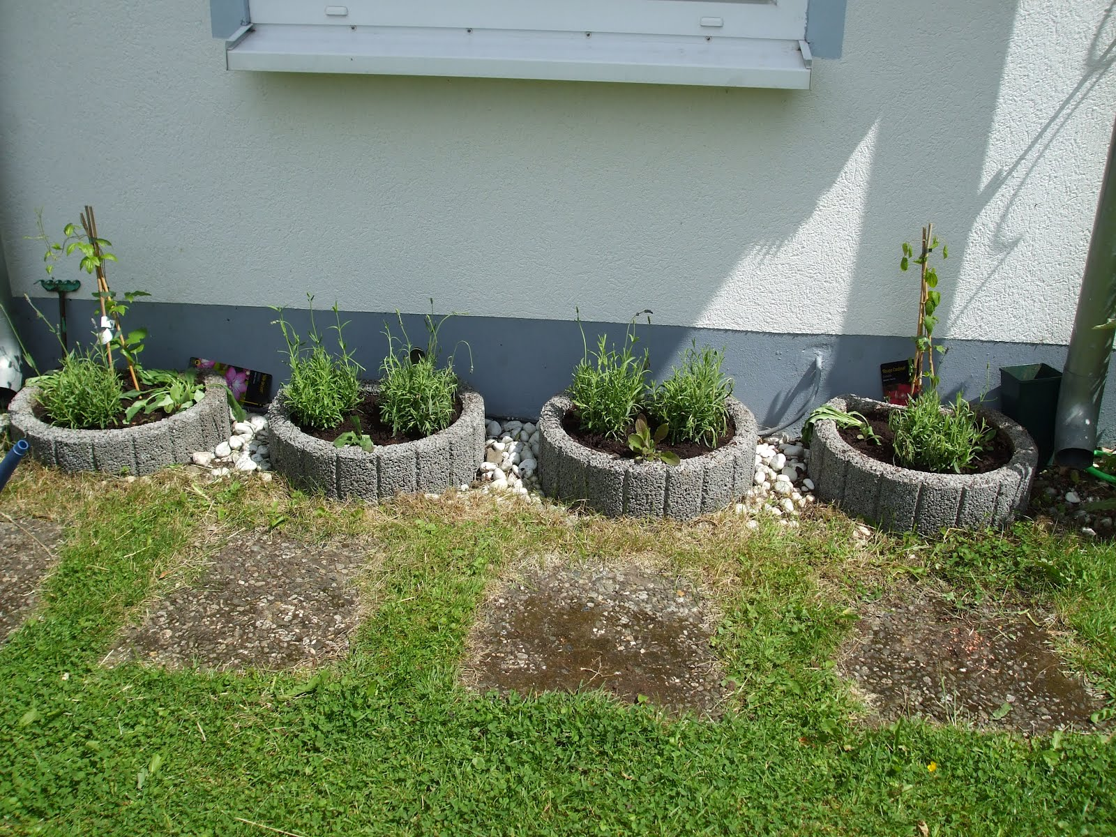 biggi 39 s erster test blog highlights of the week lavendel gepflanzt. Black Bedroom Furniture Sets. Home Design Ideas