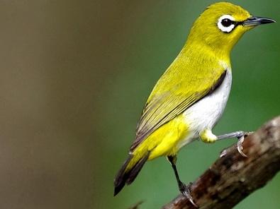 ... Results for: Tips Singkat Membedakan Burung Pleci Jantan Dan Betina