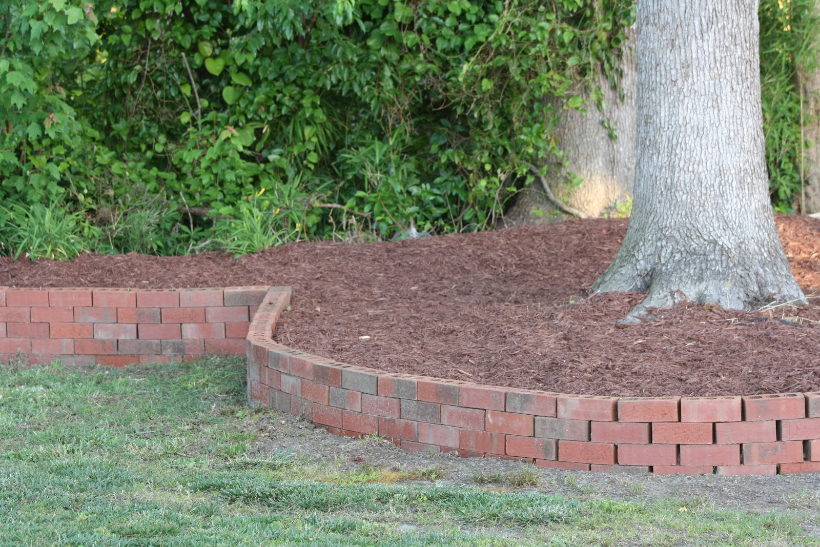 backyard berm a big update