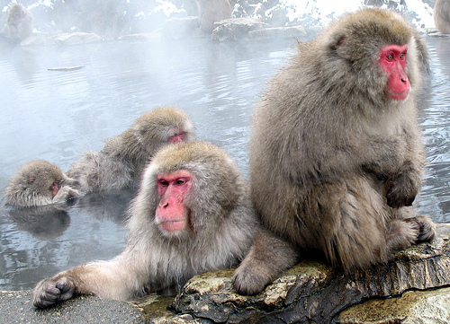Baños Termales Japoneses:Así es mi vida en Tokio: Las aguas termales para los monos