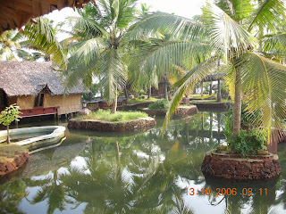 coconut trees at cochin resort
