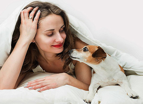Comprovado: cachorros conseguem mesmo entender os que os humanos falam