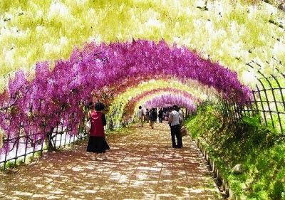 Gambar Pemandangan Terindah Di Jepang Foto Gambar Terbaru