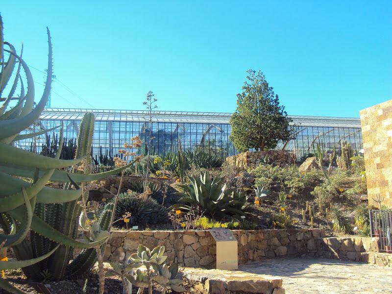 Aprendiendo entre espinas visita al jard n bot nico de for Cactus de exterior