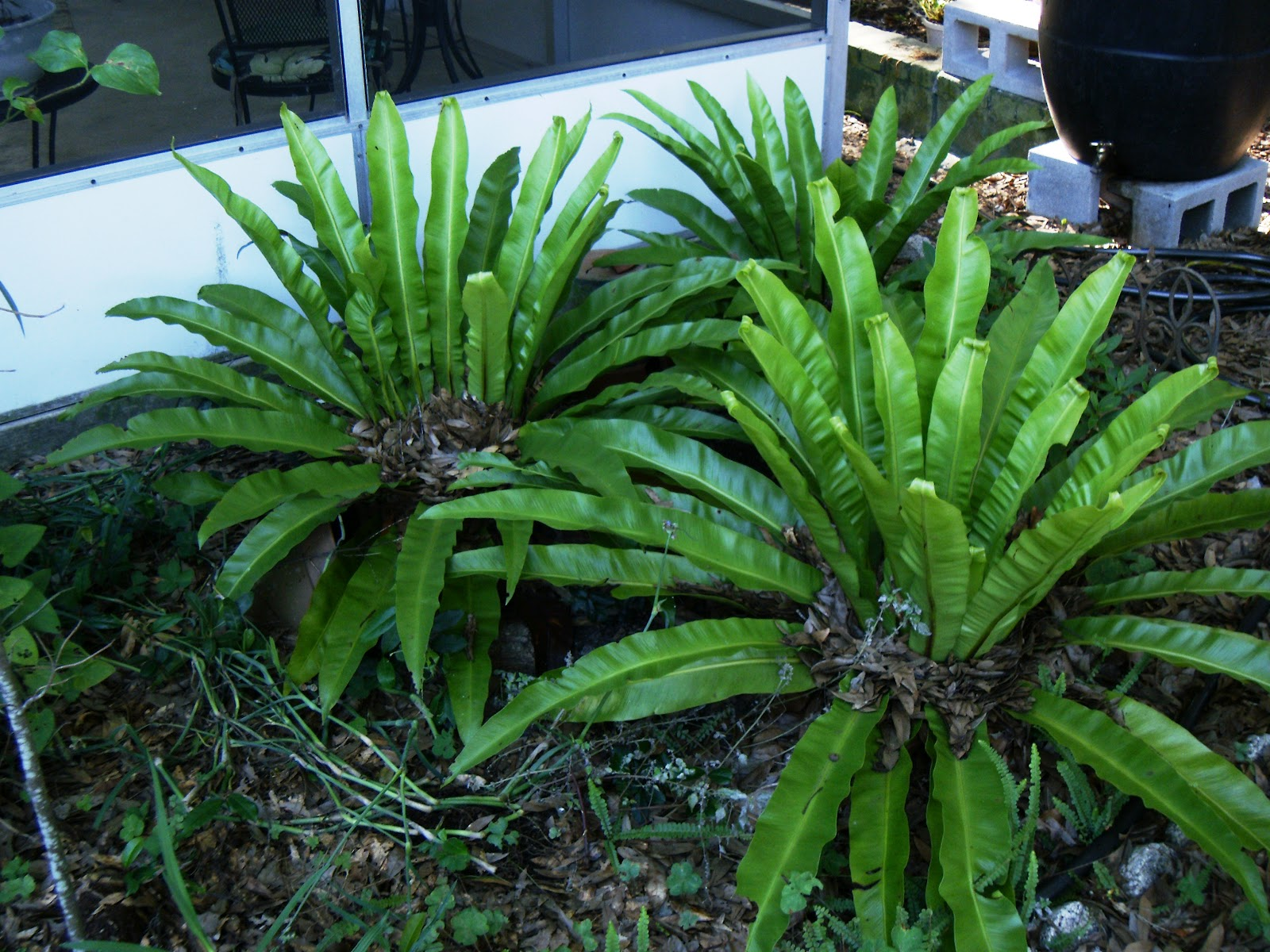 Landscape plants for south florida for Landscaping plants