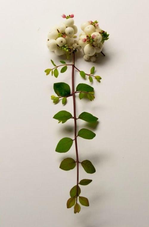Camila Sitarama Carlow arranjos plantas flores órgãos humanos Cérebro