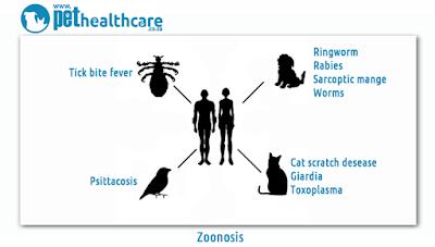 Vật nuôi có liên quan tới các căn bệnh mới
